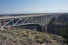 bighorns found shade (rovingmagpie) Tags: newmexico taos riograndegorgebridge riograndegorge riogrande thehighbridge bridge bday2017 bighornsheep desert bighorns shade