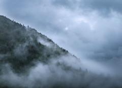 Misty forest (coagator) Tags: mist misty forest fog rain clouds landscape serbia green