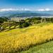 Harvesting of rice terraces (shinichiro*) Tags: 上田市 長野県 日本 jp 20170909ds47563 2017 crazyshin nikond4s afsnikkor2470mmf28ged september autumn ueda nagano japan 稲倉の棚田 刈り取り 収穫 riceterrace 37253384246 candidate