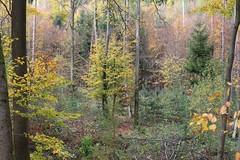 Mischwald (Klaus R. aus O.) Tags: wald laubbaum laubwald steigerwald ruhe erholung bunt laub mischwald naturpark nationalpark urlaub reise herbst natur