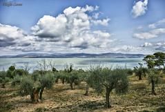 Umbria 2017 (Leone Biagio) Tags: trasimeno lago lake umbria