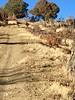 New Mexico Elk Hunt 33