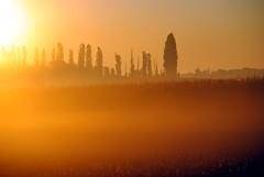 Silent morning (Tobi_2008) Tags: sonnenaufgang sunrise landschaft landscape bäume trees sachsen saxony deutschland germany allemagne germania diamondclassphotographer platinumheartaward