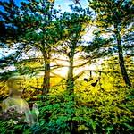 The Sacred Wood thumbnail