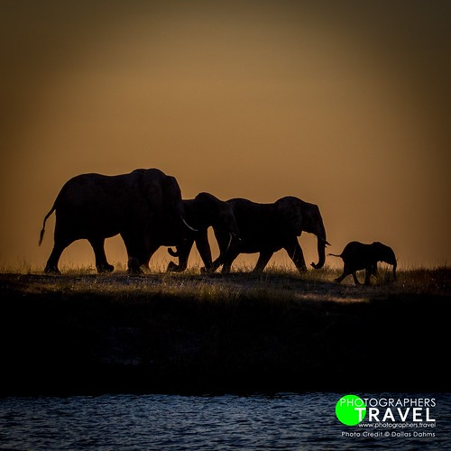 Elephants - Chobe 2014