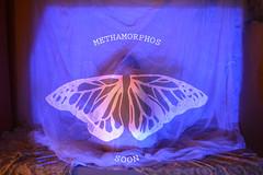 METHAMORPHOS (SHEILA❁UVE @psychoessence) Tags: essence psychoessence sheilauve sheila uve mariposa butterfly papallona methamorphos metamorphosis soon video art woman women girl cute projector