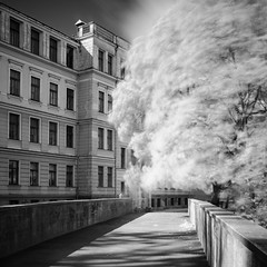 Trees and concrete (MarxschisM) Tags: riga latvia tree park building architecture bw ir filter long exposure
