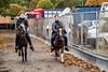 Ballinasloe Horse Fair (Clem Mason) Tags: horse fair festival ballinasloe galway animal 2017 race october clemmason canon ngc