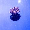 Valencia - Oceanografic (Chantal_D84) Tags: g9xmk2 chantal citytrip spanje valencia oceanografic jellyfish
