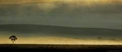 Teton Dawn (Sharon's Nature) Tags: sunrise jackson jacksonhole goldenhour canon tetons scenic