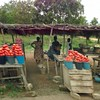 Tomatoes, Roadside Market, Adidome, Volta, Ghana, #JujuFilms (Jujufilms) Tags: tomatoes roadsidemarket volta ghana jujufilms