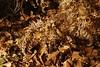171008 - 28 - Nomaglio - Museo Castagna (mastino70) Tags: nikon d80 ag 2017 italia italy piemonte piedmont nomaglio ecomuseo castagna chestnut museum