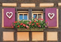 Elsass Klischee (madbesl) Tags: esass elsas alsace frankreich france europa europe riquewihr fenster window blumen flowers fachwerk olympus omd em10 m10 omdem10 zuiko1250 hautrhin