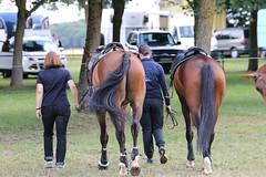 _MG_5899 (dreiwn) Tags: ridingarena reitturnier reiten reitplatz reitverein reitsport ridingclub equestrian showjumping springreiten horse horseback horseriding horseshow pferdesport pferd pony pferde tamronsp70200f28divcusd