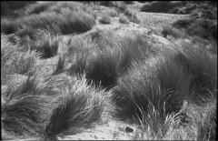 6x9 (Mark Dries) Tags: markguitarphoto markdries royer 6x9 foldingcamera angenieux triplet ilfordfp4 dof film filmphotography dunes dunescape dutch mediumformat filmcamerainyourpocket