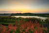 秋夕與台灣欒樹(Autumn sunset and Koelreuteria elegans)。 (Charlie 李) Tags: taiwan tainan sunset koelreuteriaelegans 夕陽 夕色 台灣 台南市 台灣欒樹