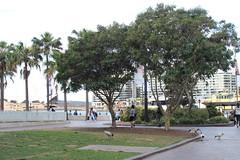 First Fleet Park