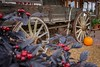 Old Wagon (K.Yemenjian Photography) Tags: canont5i canon700d canon depthoffield dof flower pumpkin old refound antique carriage amish amishwagon wagon farm