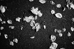 Sentimental 52.365 (ewitsoe) Tags: fall autumn mood atmosphere leaves bnw blackandwhite nostalgia feelings mystery ewitsoe nikond80 35mm street city details life poznan poalnd anywhere everywhere simple thoughts 365 52 project fallingleaves leaf ground