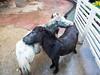 PA224210 (tatsuya.fukata) Tags: thailand samutprakan crocodilefarm animal hourse