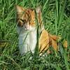Unknown cat : Riddarhyttan, Sweden (Tankartartid) Tags: skuggor shadows soligt sunny straw grässtrån strån grönt gröntgräs gräs närbild europe sverige sweden natur nature closeup greengrass grass katt cat instagram ifttt