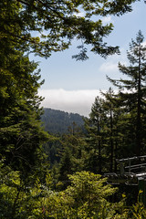 Hwy 101 CA-OR July 2018-10 (ntisocl) Tags: 2017 california californiacoast canon1dmarkiii hwy101 pacificnorthwest redwoodhwy treesofmystery redwoods roadtrip roadsideattraction trees