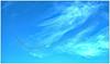 Skein (bob the bolder) Tags: uk durham goose skein migrate fly formation