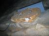Chert nodule in limestone (Ste. Genevieve Limestone, Middle Mississippian; Rose's Pass, Mammoth Cave, Kentucky, USA) 1 (James St. John) Tags: chert nodule nodules roses pass mammoth cave ridge national park kentucky ste genevieve limestone mississippian scallops