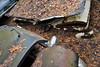 DSC_0665 v2 (collations) Tags: ontario mcleansautowreckers autowreckers wreckers automobiles autos abandoned rockwood derelict junkyards autograveyards carcemeteries