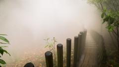 Mysterious road (Jean-Luc Peluchon) Tags: fz1000 lumix lumière light brume brouillard atmosphere fog mystery mist mysterious chemin path pathway forest forêt weather autumn rain pluie automne halloween