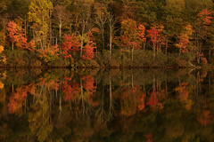 Across the Lake (SunnyDazzled) Tags: reflection fall foliage color autumn trees lake waters shore shoreline forest colorful red leaves snapshot newyork harrimanstatepark laketiorati