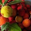 2.retour de cueillette (garance11) Tags: arbouse occitanie renneslesbains cueillette rouge jaune fruit automne forêt portrait boule sphère arbutusberry