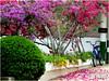 Primavera colorida. (o.dirce) Tags: plantas bike bicicleta colorida interessante odirce flores primavera