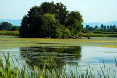 Dywan z kotewki i grztybieńczyka 41 (Hejma (+/- 5400 faves and 1,7 milion views)) Tags: landscape grass pond cover coyote tree redwood wood birds cane forest