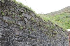 IMG_3230 (avsfan1321) Tags: kylemoreabbey ireland countygalway connemara garden