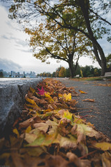 Stanley Park in the fall❤️😍 (Sonika Arora 604) Tags: vancouver vancity fall fallinvancouver colors colours nature naturallight natural nikon nikonphotography nikonphotographer nikonphotographers nikond800 explorebc explorecanada explorevancouver canada beautifulbc beautiful britishcolumbia bc stanleypark park leaves leaf path walking running bench trees branches towers buildings grey sky tones highlights shadows red colourful
