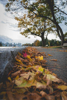 Stanley Park in the fall❤️😍