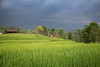 Bali Travel Rice Field (Chris M. S) Tags: bali travel rice field canon 6d landscape photography photoshot nature naturephotography love indonesia riceplant