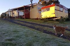 Kitty traut sich mal aus dem Haus, und das bei frostigen Temperaturen. Der Winter schaut auch in Ohui mal für ein paar Tage vorbei.