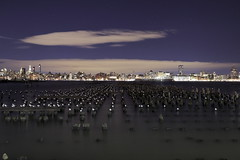 Birds Asleep In A Grid Pattern (95wombat) Tags: newyorkcity jerseycity hudsonriver night dark birds seagulls decay