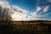 Sunset Over Hay Field (Matt 23998) Tags: grass autumn sun country field fenceline vegreville clouds alberta bales sky farm rural fall sunset fence