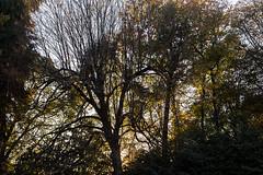 trees (Fernando Stankuns) Tags: fernando stankuns photo fotografia confraria bomjesus monte braga basilica mosteiro catedral chiesa church parque pordosol sunset tramonto 2017