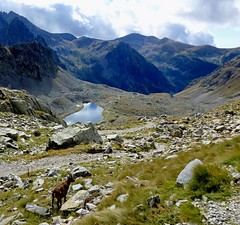vue avec bouquetin (b.four) Tags: montagne mountain lacdesfenestre hautevésubie alpesmaritimes madonedesfenestre bouquetin stambecco ibex ruby3 coth5