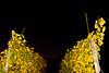 Big dipper (Marcin Weisbrot) Tags: sky stars bigdipper remich