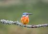 untitled-1 (graemecave) Tags: kingfisher canon canon5dmk111 bird birds fish colours canontest 100400l leeds yorkshire england blue exposure green mk111 uk portrait river water exposur zz