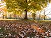 Autumn in Wisconsin (Mark.W.E) Tags: 52 autumn browndeerpark canon canong10 colors fall leaves park saturday seasons sun sunshine usa wi walk wisconsin