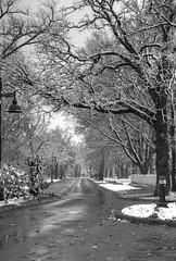 First Snow 10-27-2017 017 (wogggieee) Tags: bear lake mn minnesota white whitebearlake colors county fall hugo pretty ramsey snow trees washington winter unitedstates us