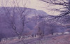 Trevethick's tramway line west of Taff near Quakers Yard station. Oak right, birch left. Skyline gap. 27/3/1971 (Mary Gillham Archive Project) Tags: 1971 21411 27031971 historyarchaeology landscape quakersyard st0896 wales edwardsville unitedkingdom gb