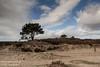 Kalmthoutse Heide [4] (Werner Wattenbergh) Tags: kalmthout antwerpen belgie bel