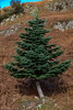 This Tree pleases me! (DJNanartist) Tags: nikond750 nikon28300mm lakedistrict anartist grasmere langdale sheep